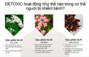 detoxic hoạt động như nào